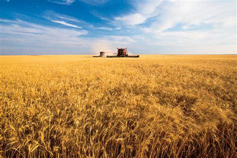 montana produces bushels    wheat farm flavor