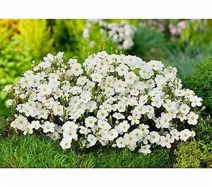 Steinbeet Pflanzen Winterhart : pin von stephanie steinbach auf garten pflanzen ~ Watch28wear.com Haus und Dekorationen