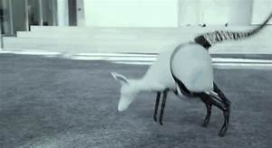 This Jumping Kangaroo Robot Could Change The Way Robots