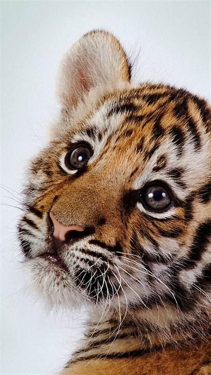 Tiger Cub Iphone