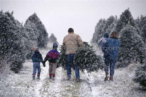 enjoy utah christmas tree farms