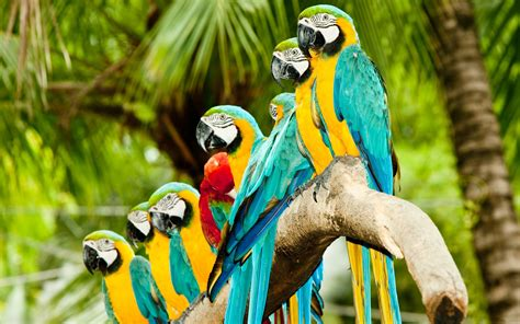 Branch, exotic wallpapers and images - wallpapers ...