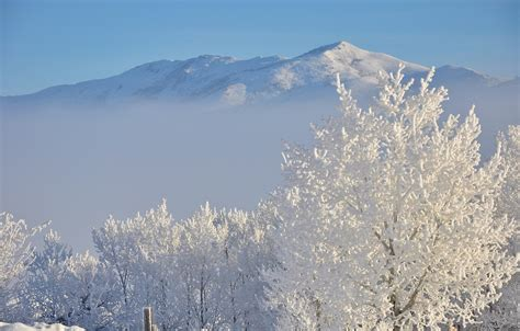 photo hoar frost snow white  image  pixabay