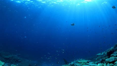 Facts About The Ocean Floor by Major Facts About The Open Ocean Ecosystem Sciencing
