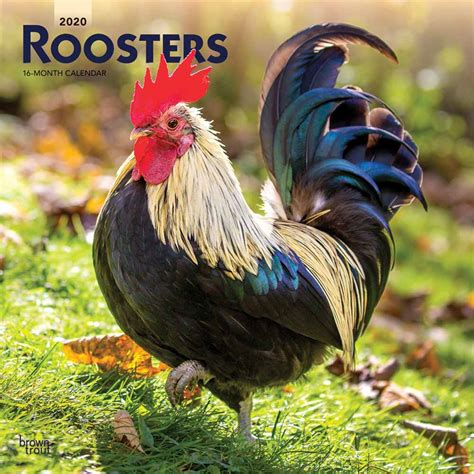 George illawarra dragons match centre includes live scores and updates. Roosters Calendar 2020