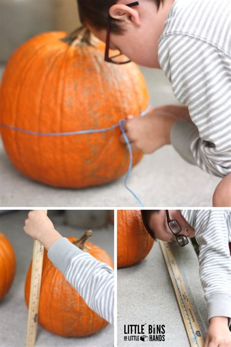 measuring pumpkins math activity  printable worksheets