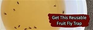 6 ways to instantly get rid of gnats fruit flies at home for Gnat infestation in bathroom