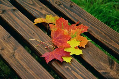 1001 idee per immagini autunno a cui ispirarsi
