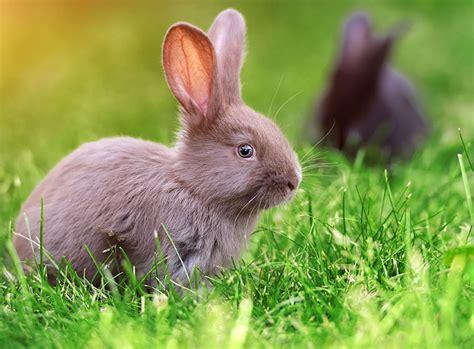 kaninchen haltung  haus und garten zooroyal magazin