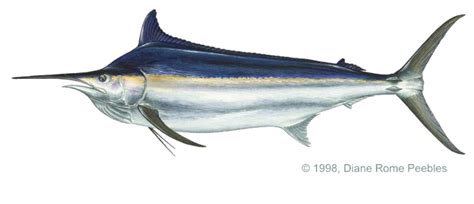 fish catalog