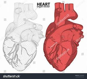 3d Heart Wireframe Mesh Digestive System Isolated On