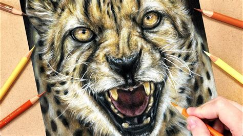 draw  cheetah  coloured pencils realistic