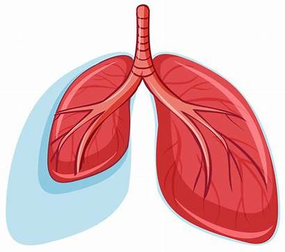 Lungs Healthy Vector Human Icons Anatomy Cpr