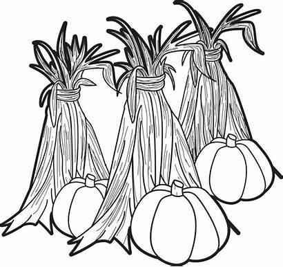 Corn Coloring Stalks Pumpkins Hay Pumpkin Pages