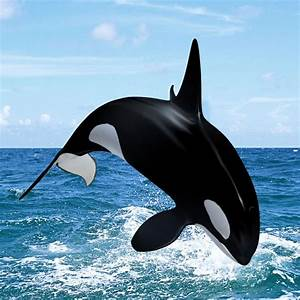 Pin On Killer Whale