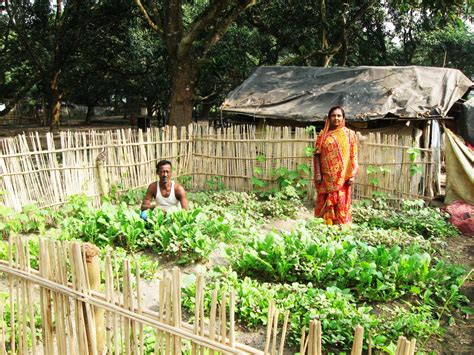 Kitchen Garden Meaning by Nutrition Garden Improving Food Security Swarnirvar
