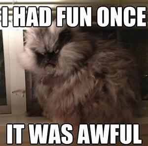 30 Funny animal captions - part 4 (30 pics) | Amazing ...