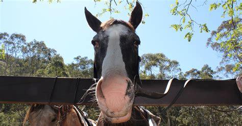 horse riding pony glenworth rides valley ride trail lead