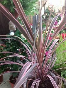 Plante Verte Exterieur Jardin Photos De Magnolisafleur