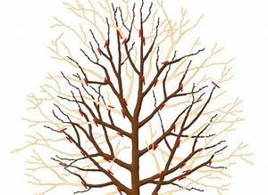 Tailler Un Citronnier : la taille d 39 hiver du poirier et du pommier jardinage ~ Melissatoandfro.com Idées de Décoration