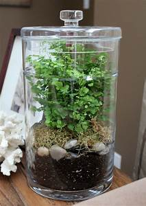DIY Terrarium - Satori Design for Living