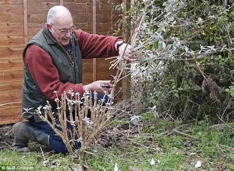cutting bushes back planning crops moving trees and pruning nigel colborn s jobs for your garden daily mail online