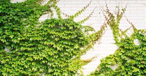 Do U Like Green, Refreshing & Creative Walls ? Here Are 12