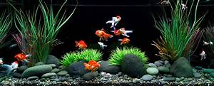 How to Care for a Goldfish: Food, Tank, Water, and Other ...