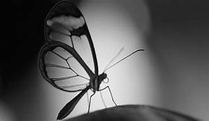 Schwarz Weiß Bilder : schwarz wei fotografie wie lerne ich besser fotografieren ~ Bigdaddyawards.com Haus und Dekorationen