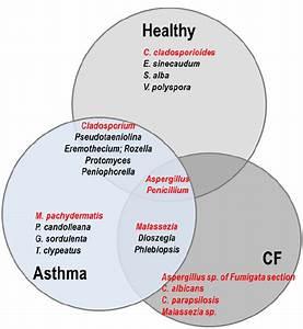 Enn Diagram Representing The Comparison Of The Respiratory