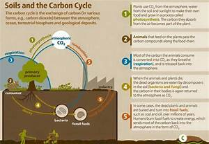 Understanding Water Retention In Soil  Soil Forum At Permies