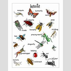 Insects Worksheets Free  Insect Vocabulary Worksheet  Doc  Outdoor Center Manipulatives