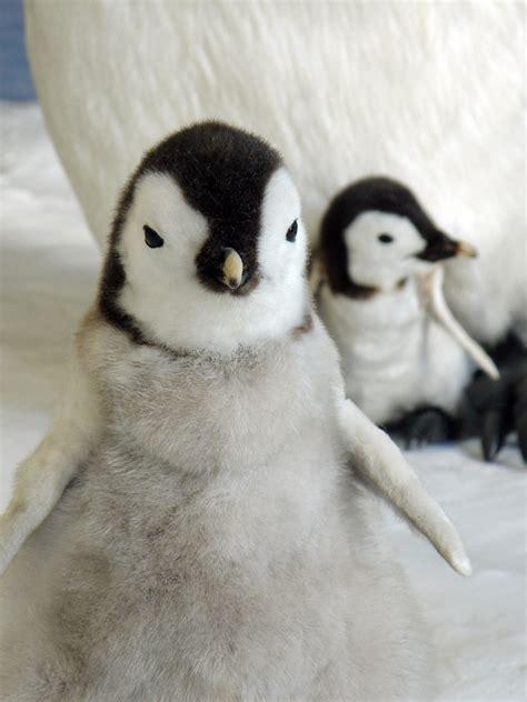 penguin stuffed baby penguin  bremenhaven marine