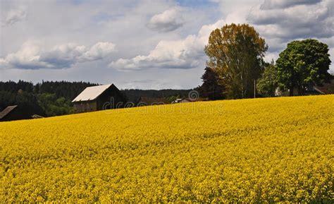 outbuildings   oregon ranch stock photo image