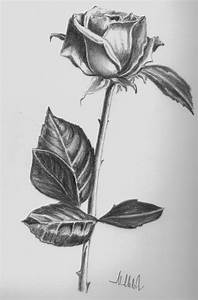 Pencil Sketching Of Flowers - Pencil Art Drawing