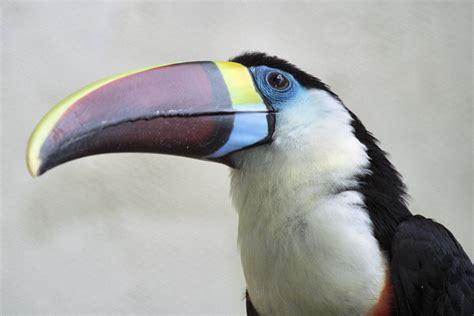 living travel malaysia kuala lumpur bird park