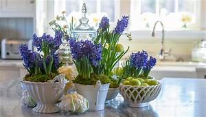 How to Grow Hyacinths Indoors - P Allen Smith