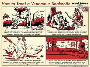 How To Treat A Venomous Snakebite