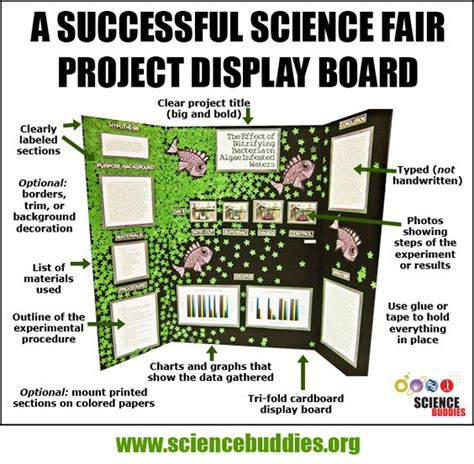 mastering  project display board review project
