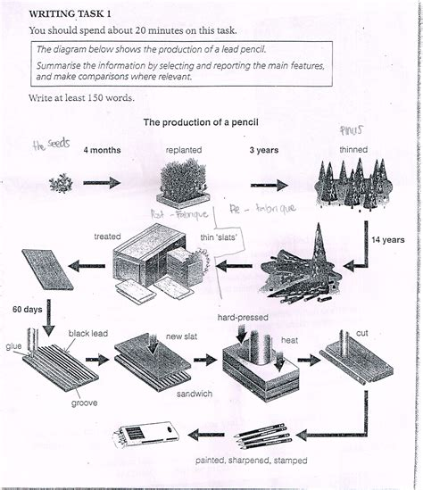 the diagram below shows the production of a lead pencil summarise the information by selecting