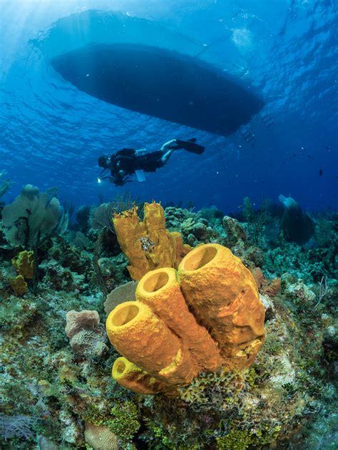 panasonic lumix gh  underwater review  digital