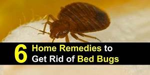6 home remedies to get rid of bed bugs incl recipes With can we see bed bugs