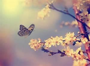7 interesantes datos sobre las mariposas que van a fascinarte Batanga