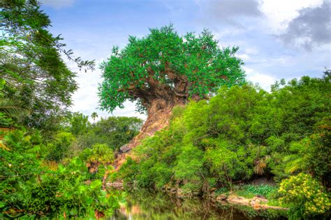 Tree of Life Wallpapers – AtDisneyAgain