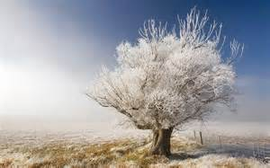 wallpapers white tree wallpapers