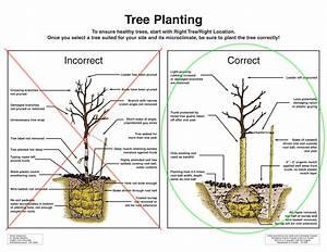New Tree Planting  U0026 Care