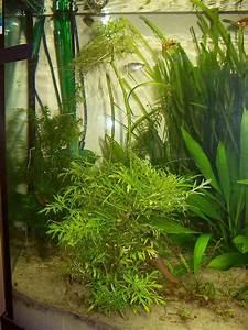 Aquarium Pflanzen Schnellwachsend : aquarium nicht im gleichgewicht mehrere probleme aquarium forum ~ Frokenaadalensverden.com Haus und Dekorationen