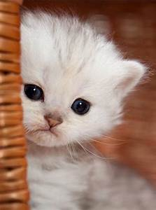 Extremely Cute Kitten - 19th May 2017 - We Love Cats and ...