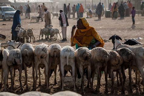 Somaliland: Shipping the sheep for Eid al-Adha | | Al Jazeera