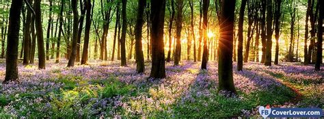 Spring Forest Sunset seasonal Facebook Cover